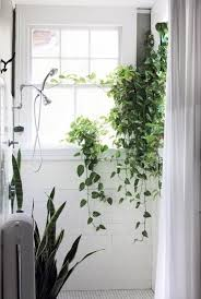 indoor vine plant 23 creative ways to make your home decor spring to life with