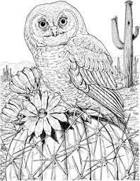 realistic owl coloring pages these are some owl coloring pages