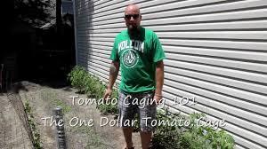 diy tomato cage youtube