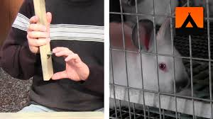 how to make a frame kit for a rabbit cage improved design youtube