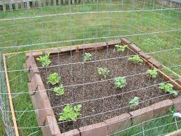 Home Vegetable Gardens by Simple Small Backyard Vegetable Garden House Design With Raised