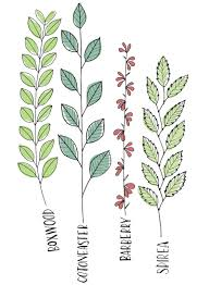 draw your plants to learn them