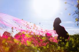 rose garden in san jose zandalus net
