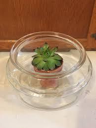 Turtle Planter Terrarium Planter Or Fairy Garden Glass Bowl Vintage Turtle Bowl