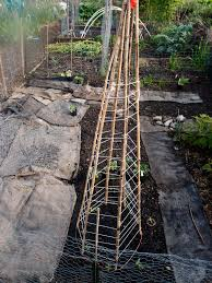 a tour of the trellises northwest edible life