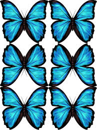 blue morpho free downloadable drawing and tutorial myrte