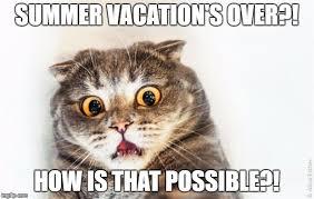 Horrified Meme - horrified cat meme generator imgflip