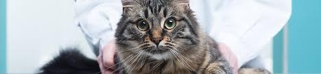 Cat Photo Album Seattle The Family Pet Veterinary Hospital Photo Album