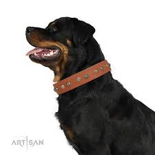 Comfortable Dog Collar Goldennsilver Luxury Fdt Artisan Leather Rottweiler Collar With