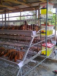 design house business plan chicken farming poultry business plan pdf writing a ou cmerge