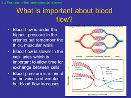 chapter 5 cardiovascular system and blood vessels ppt
