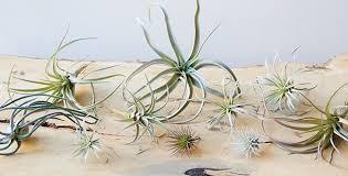 unique plant terrariums for sale glass terrariums chive