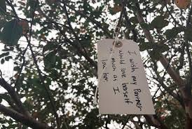 wishing tree wishing tree in s bruning green park spreads cheer