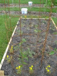 tomato cages about colourful tomato cages and tomato plants for