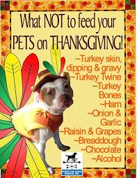 what not to feed your pets on thanksgiving do it and how