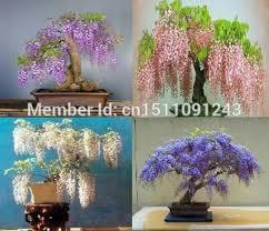 cheap mini bonsai trees for sale find mini bonsai trees for sale