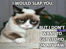 1554 best grumpy cat images on pinterest funny kitties funny