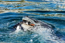 danger beneath the water 10 facts about leopard seals