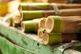 bambou feng shui bambou porte bonheur u2013 une plante qui attire de bonnes énergies