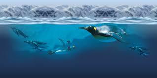 kelly tarlton u0027s sea life aquarium auckland cheapest tickets