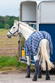 miniature horse rug buying guide ebay
