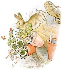 mr mcgregor s garden rabbit great books for children in defense of mr mcgregor