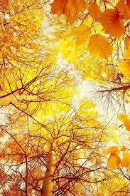 593 best fall wallpaper images on pinterest fall wallpaper