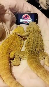 Lizard Meme - funny lizard watching jurassic park loldamn com