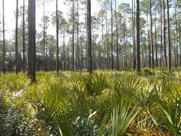 bayard conservation area trail florida alltrails com