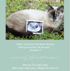 new years card pregnancy announcement sinay info