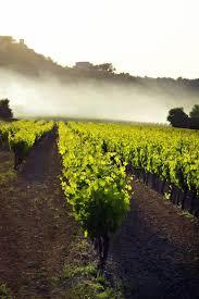 Best 25 Vineyard Ideas On Pinterest California Wine Napa Usa