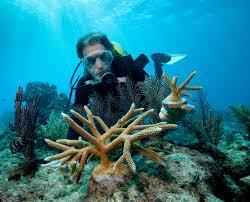 gift ideas for ocean lovers