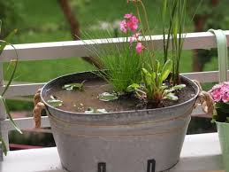 miniteich balkon 17 best images about mini teich on gardens and