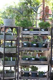 9 secrets to growing succulent plants indoors gardenista