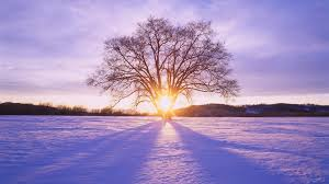 1920x1080 shiny sun tree snow scenery desktop pc and mac wallpaper