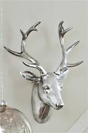 reindeer stag trophy stag antlers and animal heads