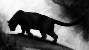 black panther 2018 4k wallpapers black tiger wallpaper klr13 hqfx wallpapers for desktop and mobile