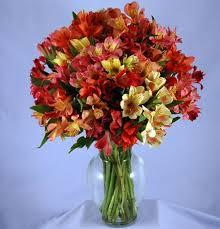peruvian lilies 100 blooms peruvian lilies kremp