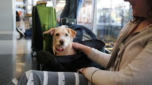 traveling with pets images United bans nearly 50 types of dogs and cats after series of