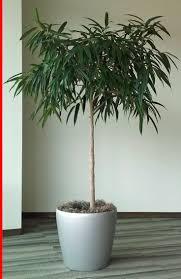 123 best house plants care images on pinterest plant care house
