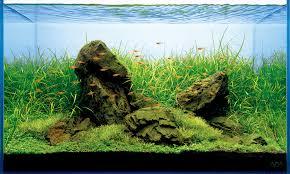 Aquarium Aquascaping Aquascaping Blog Alles Over Aquascaping En Algbestrijding
