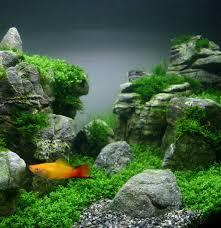 idee deco aquarium aquarium avec plante naturelle images gratuites arbre la nature
