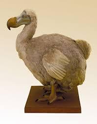 five fascinating creatures now extinct europeana
