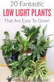 best house plants best low light indoor house plants for sale