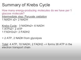 pyruvate oxidation and krebs cycle ppt download