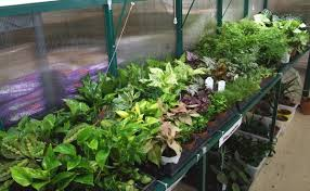 tips for growing small indoor plants in a tropical green house
