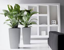 inside house plants livingroom in house plants outdoor planters hanging plants