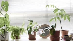 plantes bureau plante de bureau livraison zamioculcas en bac à réserve d eau la