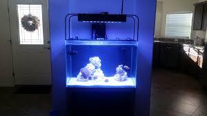 sb reef lights review sb reef lights day 1 reef2reef saltwater and reef aquarium forum