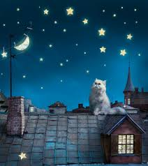 wall mural wallpaper cat starry sky roof at night photo 180 x 202 wall mural wallpaper cat starry sky roof at night photo 180 x 202 cm 1 97